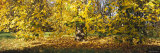 Trees in Autumn, Stuttgart, Baden-Wurttemberg, Germany Photographic Print by  Panoramic Images