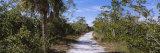 Indigo Trail, J.N. Ding Darling National Wildlife Refuge, Sanibel Island, Florida, USA Photographic Print by  Panoramic Images