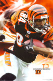 Cincinnati Bengals- TJ Houshmandzadeh Posters