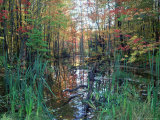 Autumn Scene in Woodland with Stream, Wisconsin, USA Photographic Print by Larry Michael