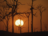 Sunset in Tropical Rainforest after Destruction by Fire, Brazil Posters by Martin Dohrn