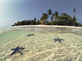 Three Seastars in Shallow Coastal Waters, Philippines, Split- Level Shot Photographic Print by Jurgen Freund