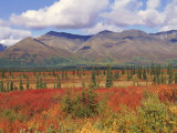 Tundra Landscape in Autumn, Denali National Park, Alaska USA Photographic Print by Lynn M. Stone