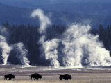 Landscape with Bison and Steam from Geysers, Yellowstone National Park, Wyoming Us Fotografisk tryk af Pete Cairns