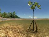 Jurgen Freund - Young Mangrove Tree Sapling Split-Level Shot, Caribbean Fotografická reprodukce