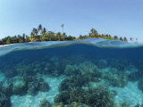 Split-Level Shot of Coral Reef and Shore, Phillippines Photographic Print by Jurgen Freund