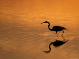 Heron Wading at Sunset, Ding Darling Nr, Sanibel Is, Florida, USA Photographic Print by George Mccarthy