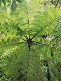 High Angle View Through Tree Fern, Monteverde Natural Reserve, Costa Rica Print by Juan Manuel Borrero