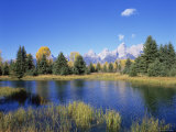 Snake River and Autumn Woodland, with Grand Tetons Behind, Grand Teton National Park, Wyoming, USA Prints by Pete Cairns