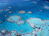 Aerial View of Hardy Reef, Great Barrier Reef and Sea, Queensland, Australia Posters by Jurgen Freund