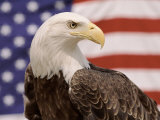 American Bald Eagle Portrait Against USA Flag Lámina por Lynn M. Stone
