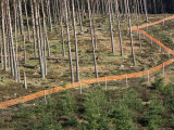 Deer Fence Protects Tree Plantation, Red Tape Reduces Grouse Collision, Highlands Scotland Print by Pete Cairns