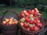 Baskets with Apples (Malus Domesticus) Europe Poster by Reinhard 