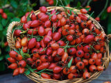 Dog Rose Hips in Basket (Rosa Canina) Europe Photographic Print by  Reinhard