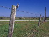 Female Ladder Backed Woodpecker, Cavity in Fence Post, Welder Wildlife Refuge, Sinton, Texas, USA Posters par Rolf Nussbaumer