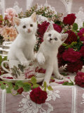 Domestic Cat, Amber-Eyed and Blue-Eyed White Kittens in a Large Teacup with Bowl of Roses Posters by Jane Burton