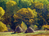 Hay Making in Bryansky Les Zapovednik in Autumn, Russia Posters by Igor Shpilenok