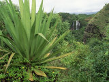 Agave Plant with Opeka Falls in the Background, Kauai, Hawaii Photographic Print by Rolf Nussbaumer