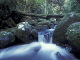 Waterfall in Rainforest, Lamington National Park, Queensland, Australia Print by Jurgen Freund
