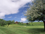 Traditional Farmhouse and Apple Tree in Blossom, Unteraegeri, Switzerland Poster by Rolf Nussbaumer