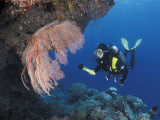 Diver Examines Coral Reef, Great Barrier Reef, Australia Prints by Jurgen Freund