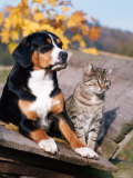 Entlebuch Mountain Dog and Domestic Cat Print by Reinhard 