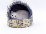 Domestic Cat, Longhaired White in Igloo Bed Print by Jane Burton