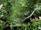 Domestic Cat Leaping at Coal Tit on Bird Bath Posters by Jane Burton