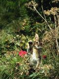 Domestic Cat Kitten in Flower Field Prints by Jane Burton