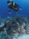 Diver and Giant Clam in Coral Reef, Great Barrier Reef, Australia Premium Photographic Print by Jurgen Freund