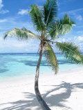 Beach with Coconut Palm (Cocos Nucifera) La Digue, Seychelles Fotografisk tryk af Reinhard