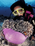 Diver with False Clown Anemonefish, in Anemone Photographic Print by Jurgen Freund