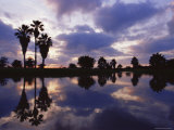 Palm Trees Silhouetted by Water at Sunset, Texas, USA Photographic Print by Rolf Nussbaumer