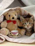 Domestic Cat, Brown Ticked Tabby Kitten, Under Blanket with Teddy Bear Photographic Print by Jane Burton