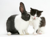Black-And-White Kitten with Blue Dutch Rabbit Print by Jane Burton