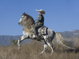 Horseman in Traditional Dress Riding Grey Andalusian Stallion, Ojai, California, USA Prints by Carol Walker