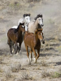 Group of Wild Horses, Cantering Across Sagebrush-Steppe, Adobe Town, Wyoming, USA Photographic Print by Carol Walker