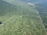 Newly Planted Oil Palm, Plantations, Lowland Dipterocarp Rainforest, Sabah, Borneo, Malaysia Posters par James Aldred