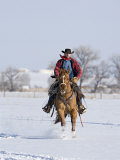 Cowboy Cantering Through Snow on Red Dun Quarter Horse Gelding, Berthoud, Colorado, USA Posters by Carol Walker
