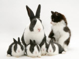 Blue Dutch Rabbit and Four 3-Week Babies and Black-And-White Kitten Prints by Jane Burton