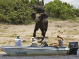 Tourists Watching African Elephants, from Boat, Chobe National Park, Botswana, Africa Prints by Tony Heald