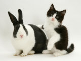 Black Dutch Rabbit with Black-And-White Kitten Posters by Jane Burton