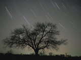 Star Trails, 20 Minutes Exposure Time, Pusztaszer, Hungary Premium Photographic Print by Bence Mate