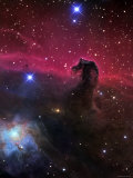 The Horsehead Nebula Lmina fotogrfica por Stocktrek Images