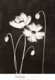 Midnight Poppies Prints by Nolan Winkler
