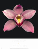 Cymbidium Poster by Harold Feinstein