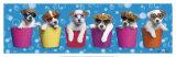 Shady Pups Kunstdrucke von Keith Kimberlin