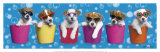 Shady Pups Print by Keith Kimberlin