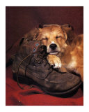 Dog Sleeping on Shoes Posters