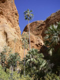 Palm Trees at Approach to Echidna Chasm, Purnululu National Park, Kimberley Photographic Print by Richard Ashworth